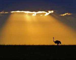 Struts i solnedgang